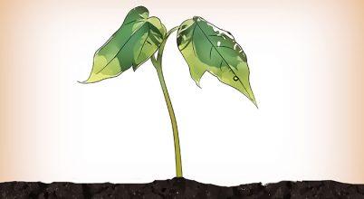 יוזמות - מהו חוק הזרעים? ואיך הוא יכול לשנות לכם את החיים...